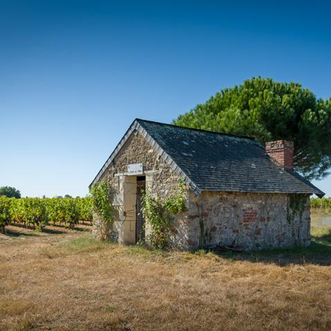 Château la Varière - Petiute maison au creux du vignoble