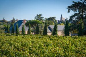 Château la Varière - Vue sur une partie du vignoble