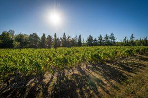 Château la Varière - Vignoble au soleil couchant